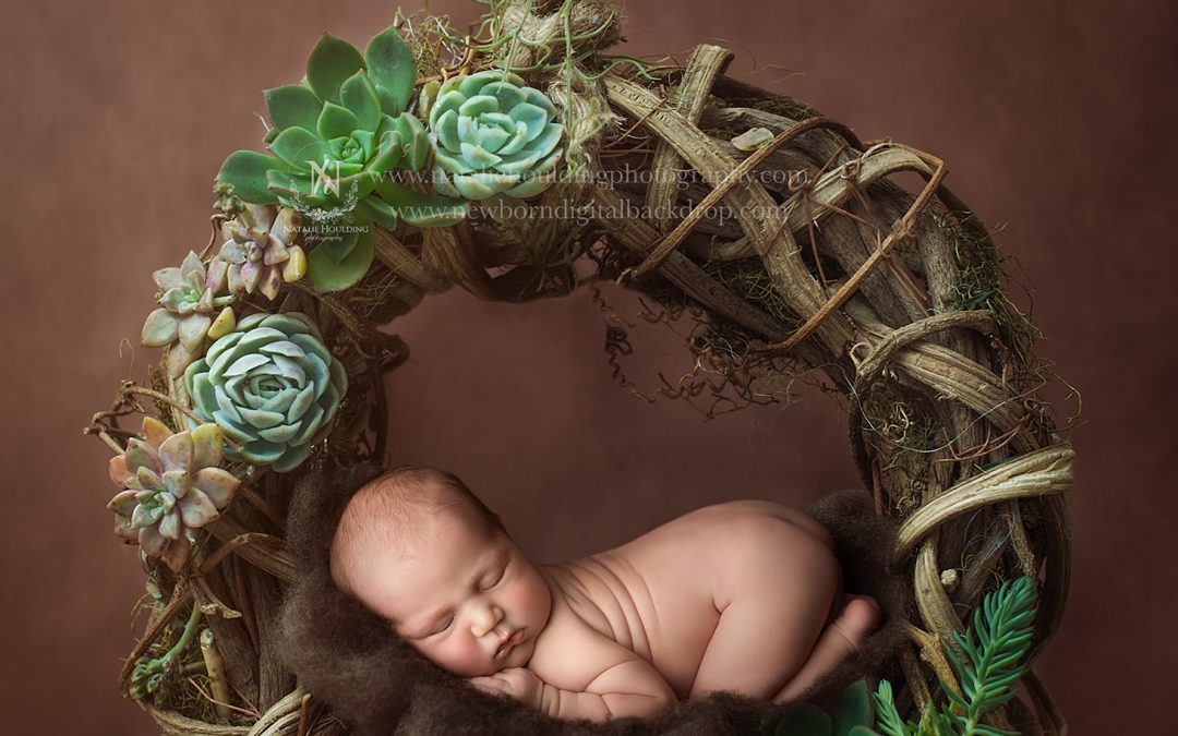 Lincoln- 11 days new – Airlie Beach Maternity, Newborn and baby Photography Studio
